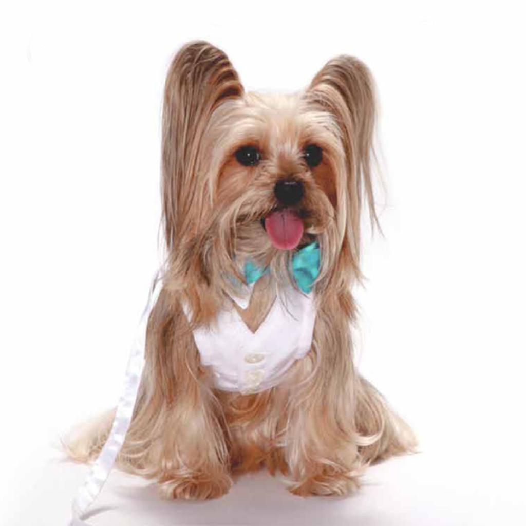 White Shirt Dog Collar with Aqua Blue Bow Tie