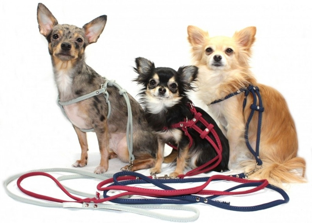 Example of harness on dogs