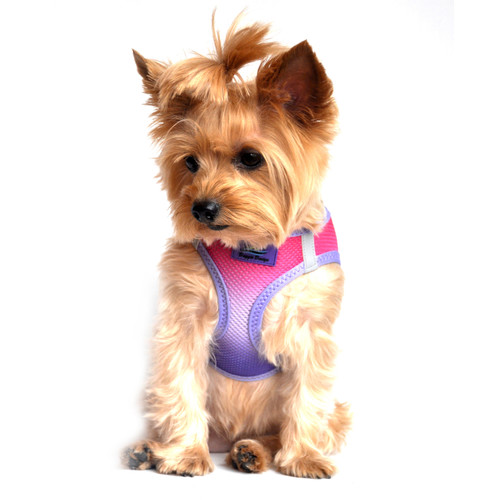 American River Dog Harness Ombre Collection - Raspberry Sundae