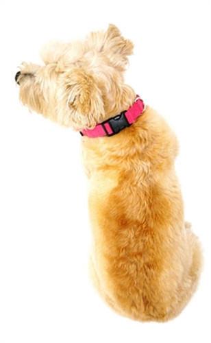 Fuschia Celebrity Quick Release Ultra Suede Collar