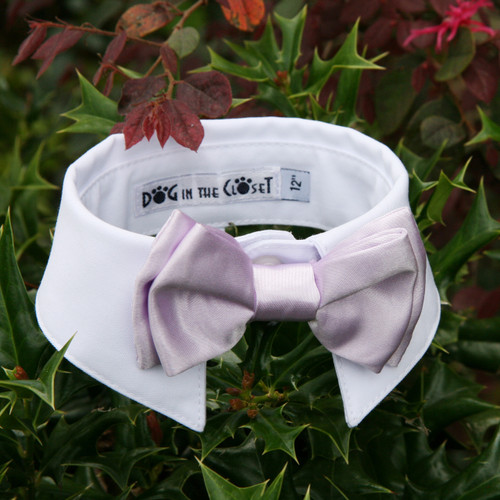 White Shirt Dog Collar with Lilac Bow Tie