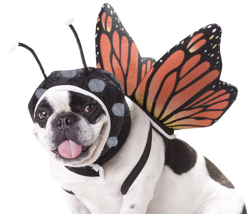 Cute Butterfly Dog Costume