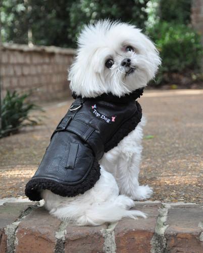 Designer Black Top Dog Vintage Flight Jacket & Leash
