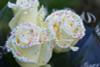 1 Dozen Birthday Cake Roses with Rainbow Sprinkles