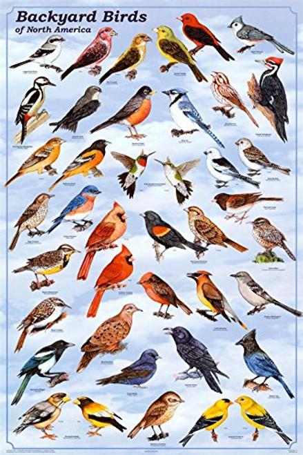 Backyard Birds Poster, 24x36