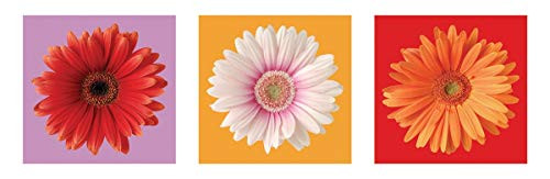 Daisies - Red, White & Orange Art Print Poster (12x36)
