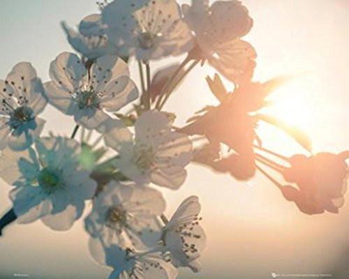 Blossom Sun Flower Poster (16 X 20)