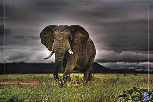 African Majesty, Save Our Planet (Elephant) Poster Image