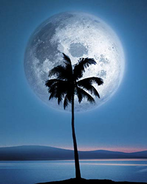 Dreamland Moonlight Palm Tree and Moon Poster 16x20