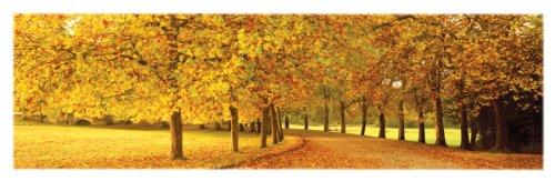 Poster Print Slim Autumn Leaves Loire Valley 12x36