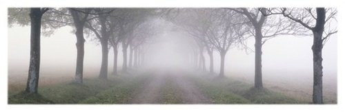 In the Mist Trees Nature Scenic Landscape Poster 12 x 36 inches