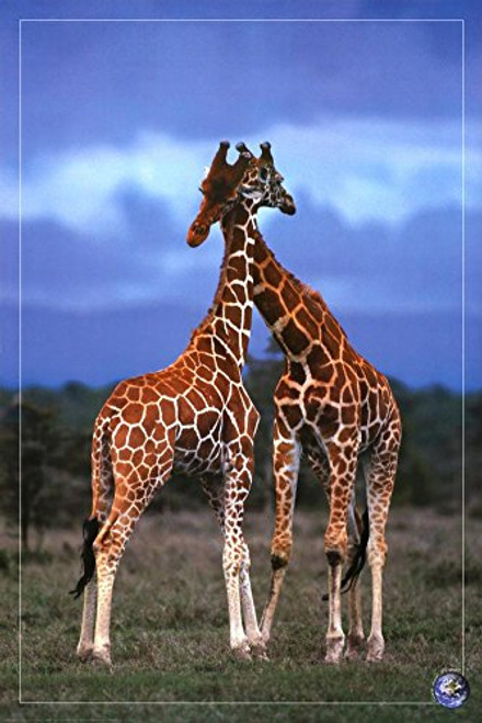 High Love, Save Our Planet (Giraffes) Art Poster Print Poster Art Poster Print, 24x36