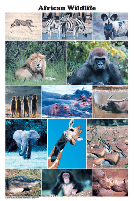 African Wildlife Photographic Poster 24x36