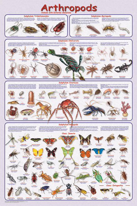Arthropods Educational Poster 24x36