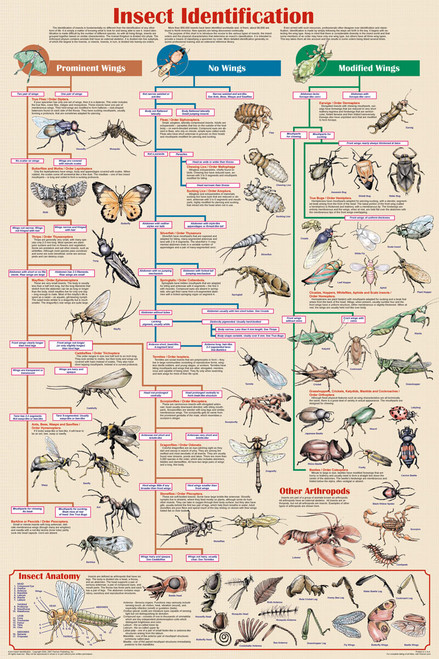 Insect Identification Educational Poster 24x36