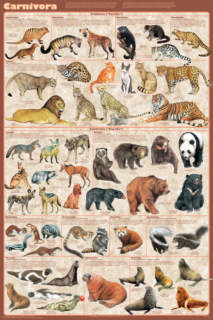 Carnivora Educational Poster 24x36