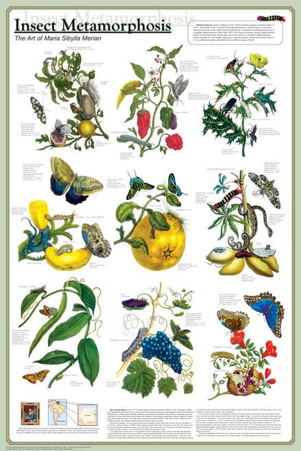 Insect Metamorphosis Educational Poster 24x36