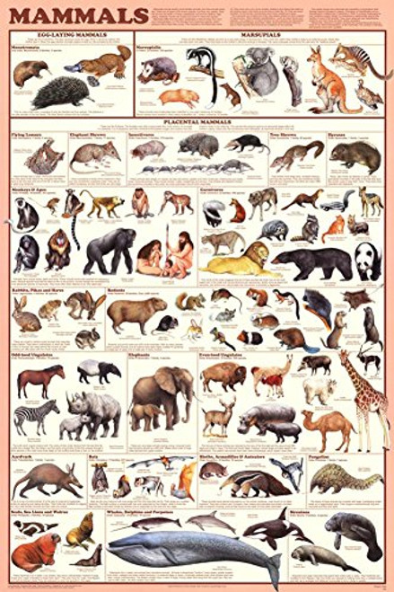 Mammals Educational Science Chart Poster (24x36)