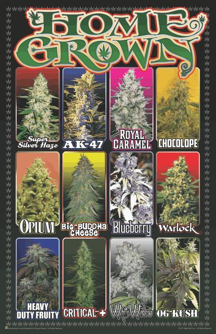 "Home Grown Marijuana Varieties Weed Mini Poster- 11"" x 17"""
