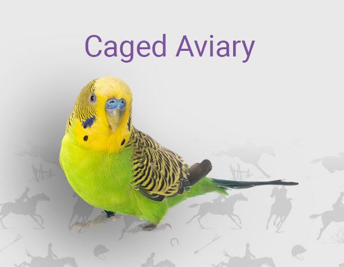 Caged Aviary