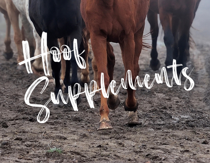 Hoof Supplements