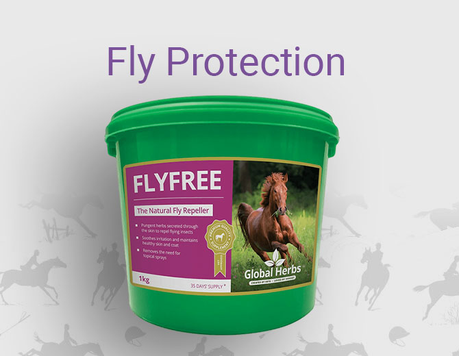 Fly Protection