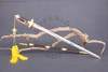 lotus, chinese, dynasty, sword, weapon, tai, chi, martial arts, damascus, handmade, handforged, hand, forged, made, steel, folded, real, cutting, practical, functional, swords,