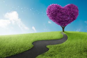 Heart, Circulation and Cholesterol