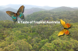 A Taste of Tropical Australia