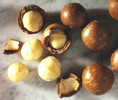 macadamia-nuts-in-shell.jpg