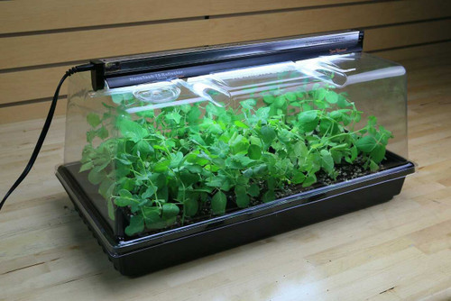 Super Sprouter Deluxe Propagation Kit - 1