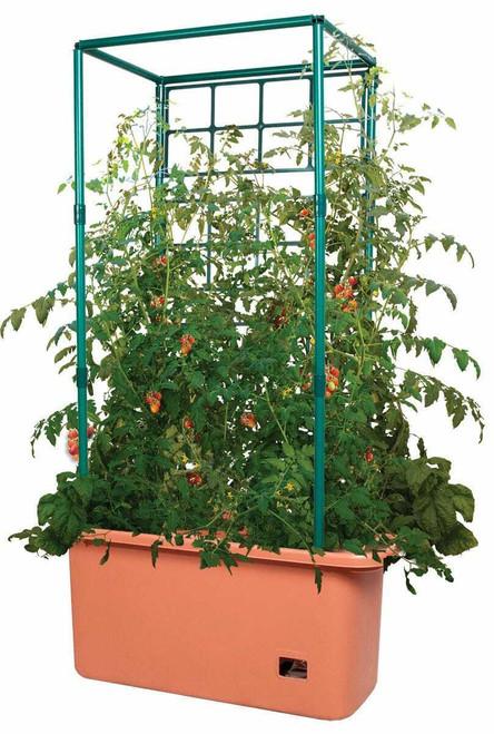Tomato Trellis - 1