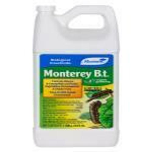 Monterey B.t. Gallon - 1