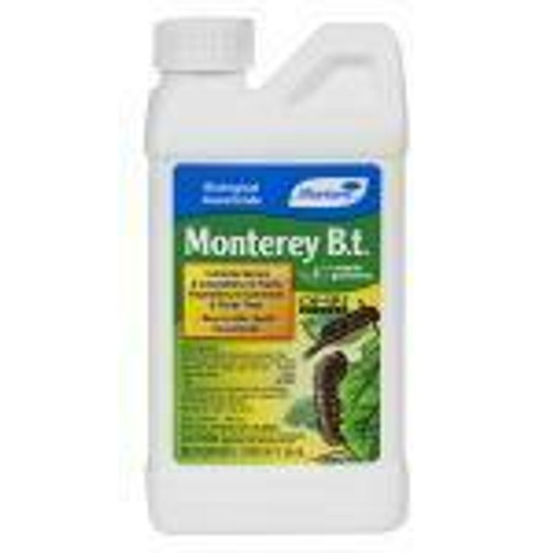 Monterey B.t. Pint - 1