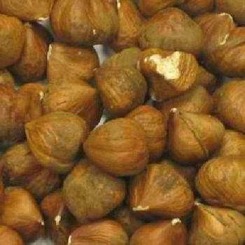 Bulk Nuts - Hazelnuts - Raw Shelled - Case of 25 - 1 lb.