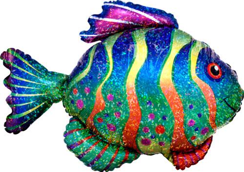 "33"" Colorful Fish"