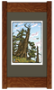 Bristlecone Pine Framed Print by Yoshiko Yamamoto