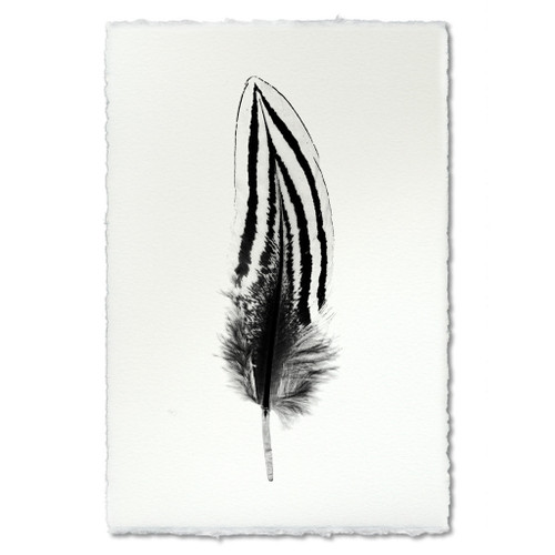 Feather Study Print #2