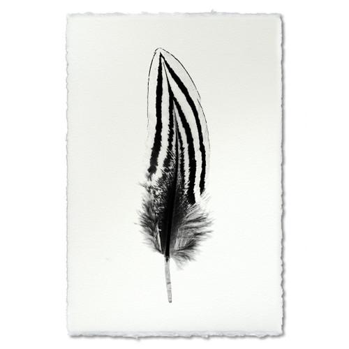 Feather Study Print #2