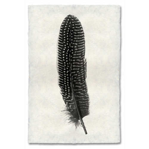 Feather Study Print #5