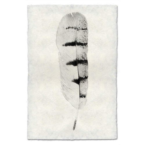 Feather Study Print #8