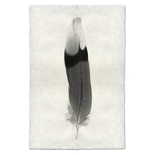 Feather Study Print #9