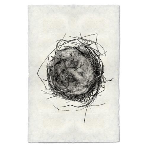 Bird Nest Study Print #7