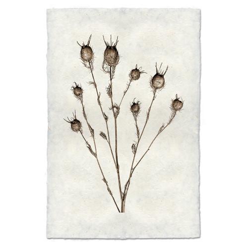 Natural Form Bulb Print
