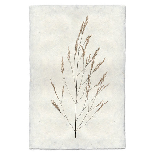 Wheat Form Print