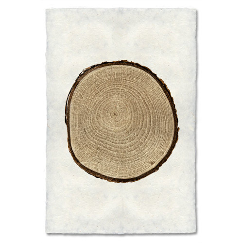 Birch Tree Ring Print