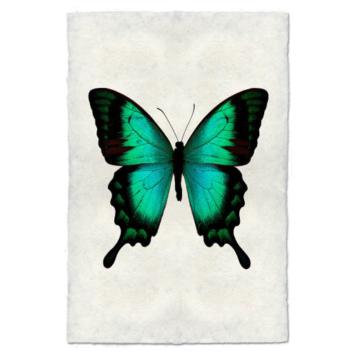 Butterfly Print #1