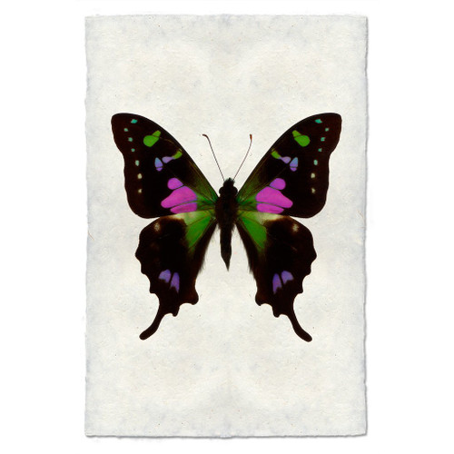 Butterfly Print #2