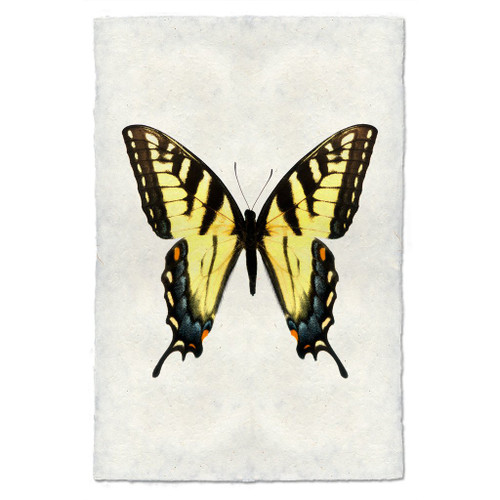 Butterfly Print #3