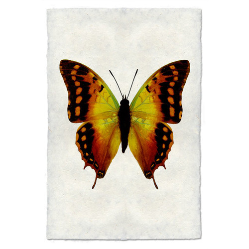 Butterfly Print #4